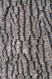 1406515_tree_bark